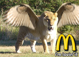 The Flying McLiger sandwich available now at McDonalds for a limited time only.
