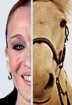 Is Sarah Jessica Parker a horse?